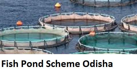 Get Subsidy in Fish farming Loan under Fish Pond Scheme Odisha