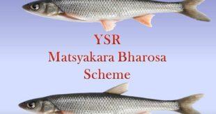YSR Matsyakara Bharosa Scheme In AP